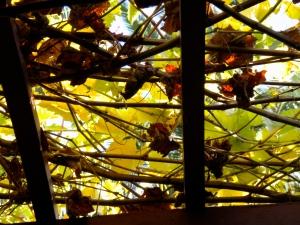 autumn light2